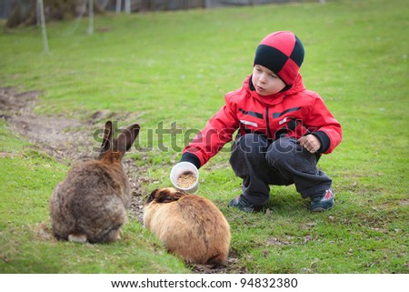Little 3 year old boy feed two rabbits in farm