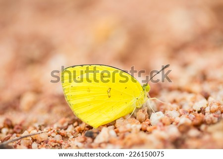 Little yellow butterfly on brown sand  - stock photo