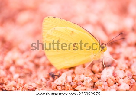 Little yellow butterfly on sand - stock photo
