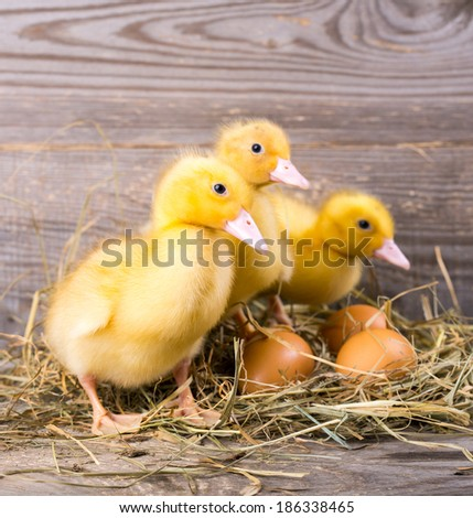 little yellow duckling on a wooden background