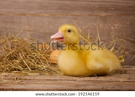 little yellow ducklings on a wooden background