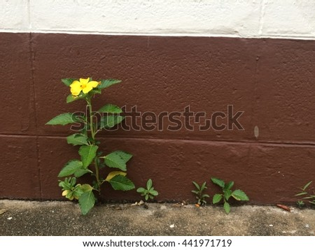 Little yellow flower on old  bricks wall background - stock photo