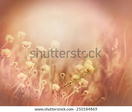 Little yellow flowers and grass in meadow - stock photo