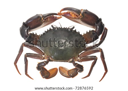 Live Crab Shot On A White Background - stock photo