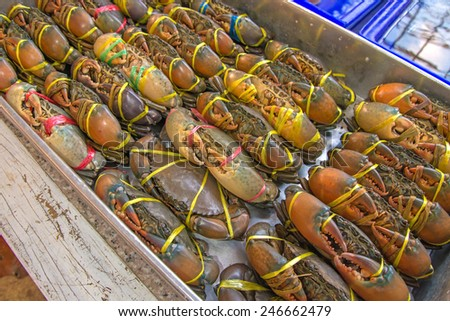 Live Crabs ready to be cooked in a market. - stock photo