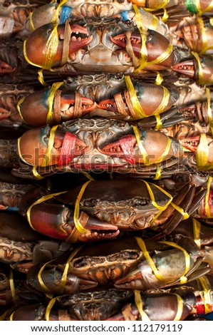 Live Crabs ready to be cooked in a market in Thailand - stock photo