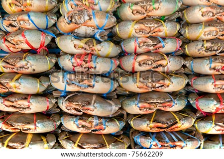 Live Crabs ready to be cooked in a market in Vietnam. - stock photo