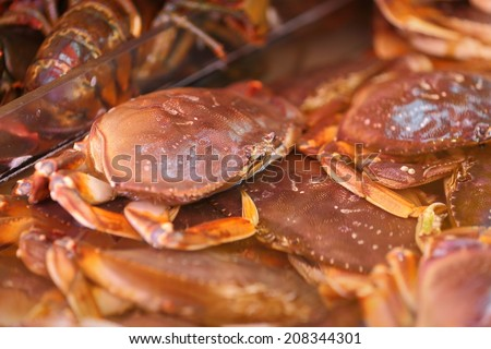 Live Dungeness Crab in Market. Live Dungeness crabs for sale at a Seattle market.  - stock photo