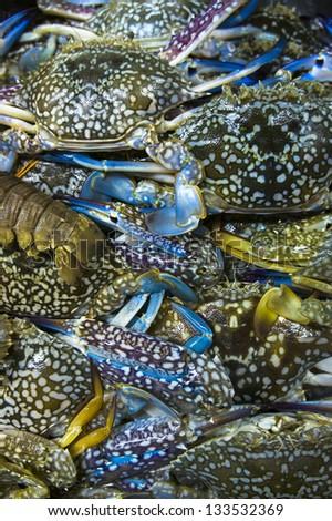Live Flower crab (Portunus pelagicus) stack up together - stock photo