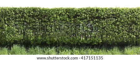 Live green spring fence from prickly hawthorn cut off bushes. Isolated on top with patch - stock photo