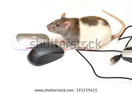 Live mouse and the computer mouse - stock photo