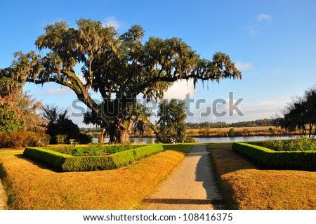 Live Oak with Spanish Moss - stock photo