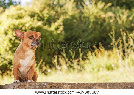 lively alert beige Puppy on bricks wall - stock photo