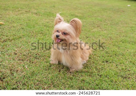 lively mixed breed dog posing in the garden - stock photo