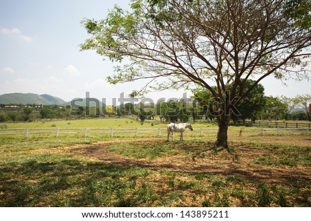 livestock, One horse eating grass in livestock field under the tree - stock photo