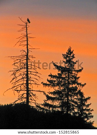 Living and dying tree - stock photo