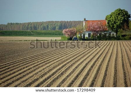 Living between the potato fields - stock photo