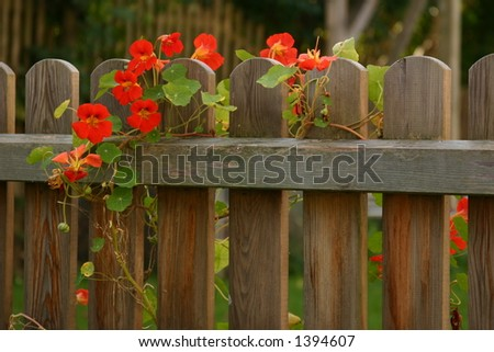 living on a fence - stock photo