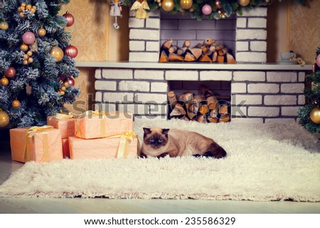 Living room on Christmas eve. Cat lying on fireplace near Christmas tree and presents. Evening light. - stock photo