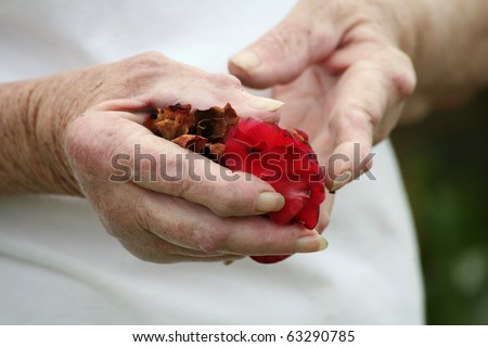 Living with pain series. Senior woman with severe chronic rheumatoid arthritis of the hands holding a rose. - stock photo
