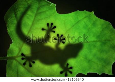 Lizard backlight silhouette in a green leaf - stock photo