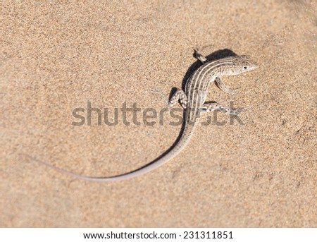 lizard in the nature - stock photo