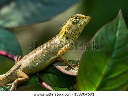 Lizard on a green leaf and green background.