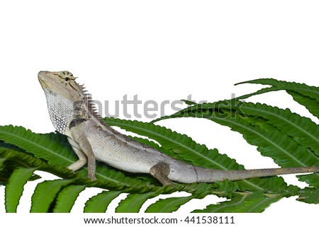 Lizard on a green leaf on a white background - stock photo