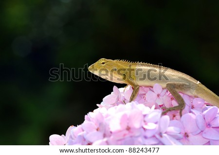 lizard on pink flower from Thailand - stock photo