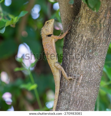 Lizard on the tree,Thailand - stock photo
