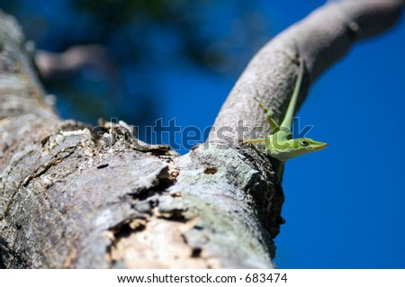 Lizard on tree - stock photo