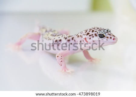 Lizard on white background. Studio.