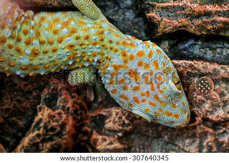 Lizard perched on a wall. - stock photo
