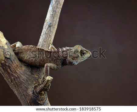 Lizard perching on the tree