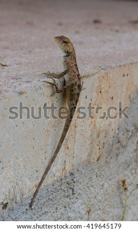 Lizard, reptile from in Thailand