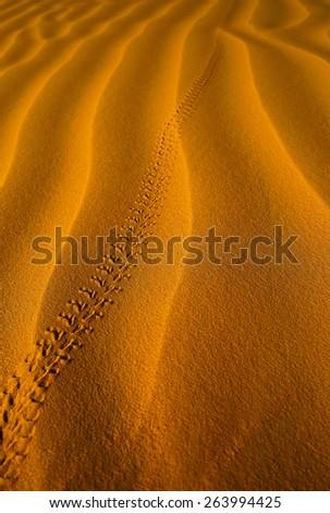 Lizard's tracks on the sand in Sahara desert - stock photo