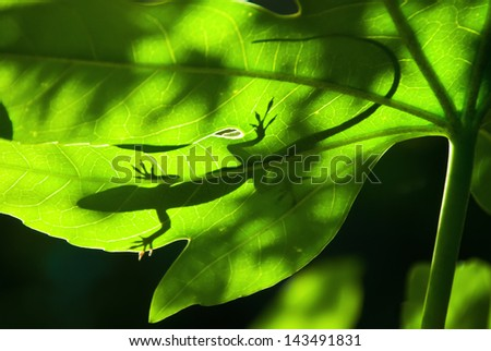 Lizard silhouette on a backlight leaf - stock photo