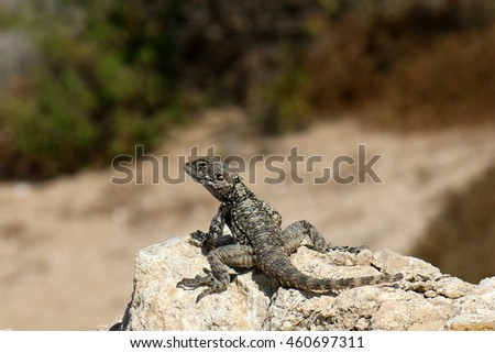 lizard sitting on a stone