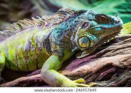 Lizard sitting on a tree. - stock photo