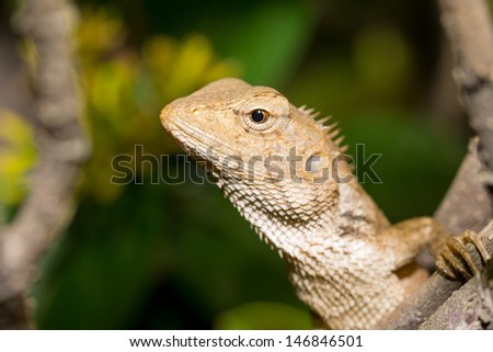 Lizard sitting on branch
