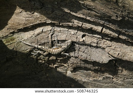 Lizard. small reptile in tree trunk