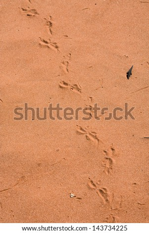 Lizard tracks across the red sand of the dunes at Cravens Peak Station, Queensland, Australia