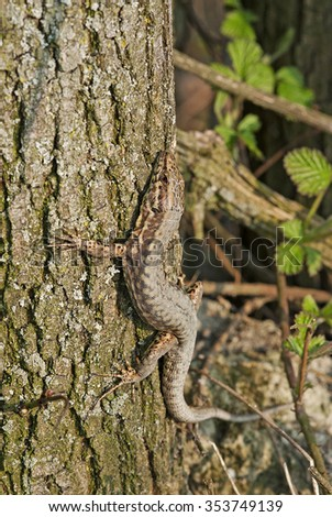 lizard while climbing tree - stock photo