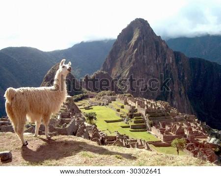 Llama at Machu Picchu, Peru, Inca, Cuzco, Andes, South America, Inka, Anden, - stock photo