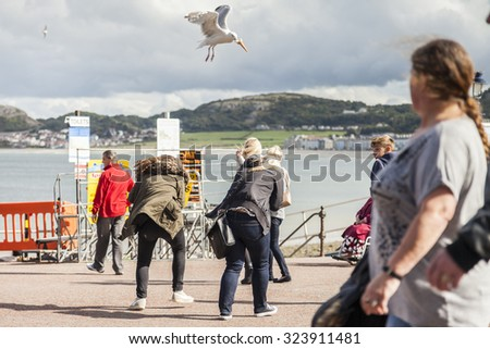 Llandudno, Wales, UK- September12th, 2015 : Tourists panic as seagull dive-bomb and steals their ice-cream cone. - stock photo