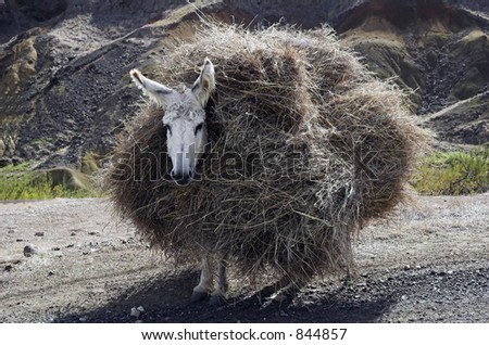 loaded donkey - stock photo