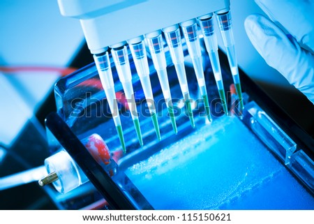 loading amplified DNA samples to agarose gel with multichannel pipette - stock photo