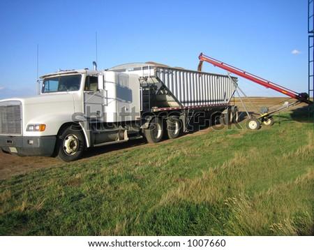 loading wheat into trucks during harvest in Saskatchewan - stock photo