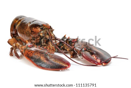 Lobster over white background.