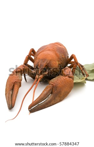 Lobster with laurel leaves on a white background.